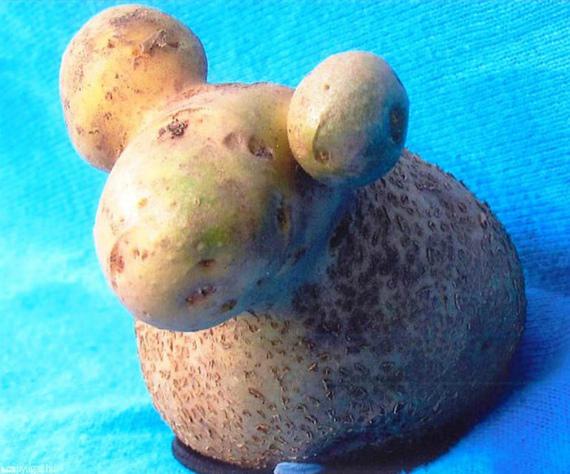 Смешной урожай картошки