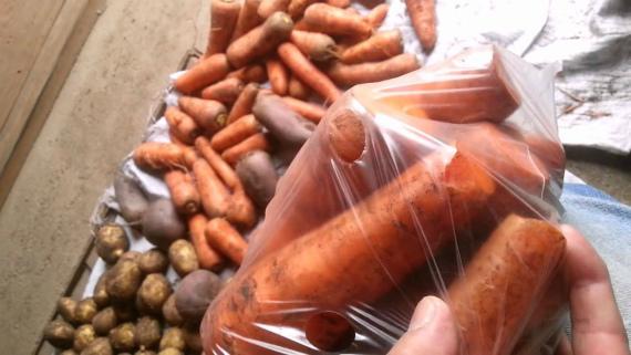 Вариант 6: хранение моркови в полиэтиленовых мешках