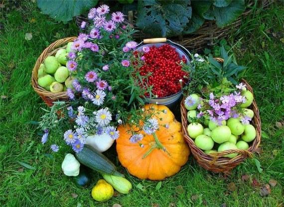 Сентябрьские работы огородников