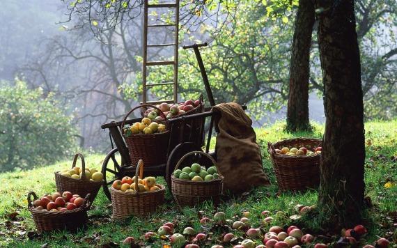 Сентябрьские работы садоводов