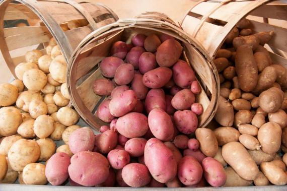 Как сохранить урожай картофеля на зиму