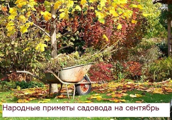 Народные приметы садовода на сентябрь