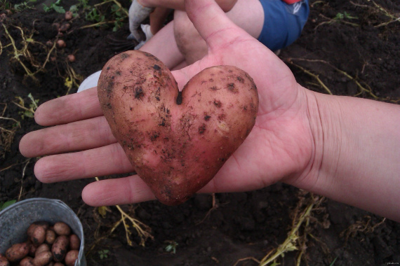 Необычная картошка