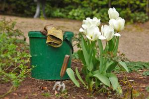 Когда садить луковицы тюльпанов осенью