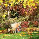 Лунный посевной календарь на сентябрь 2019 года садовода и огородника