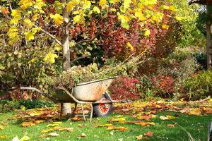 Лунный посевной календарь на сентябрь 2019 года садовода и огородника Таблица