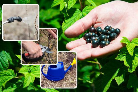 Советы садоводов