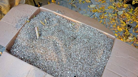 Как хранить георгины в вермикулите