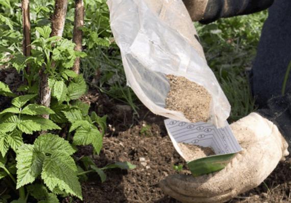 Минеральные вещества для подкормки малины осенью
