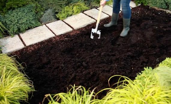 Выбор места на участке и подготовка почвы