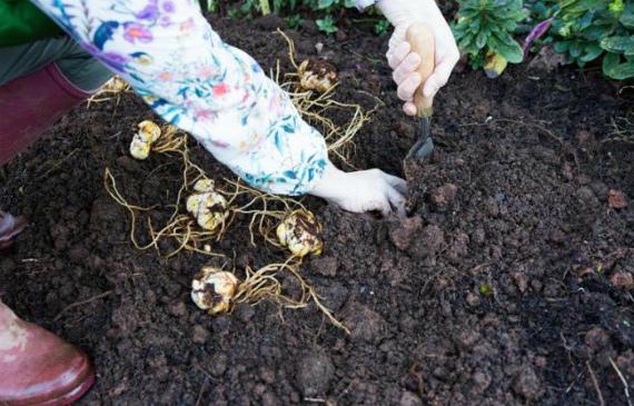 Выбор места и подготовка почвы