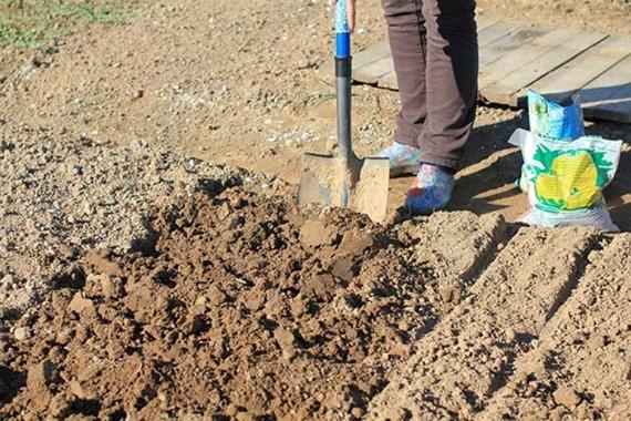 Подготовка почвы и грядки