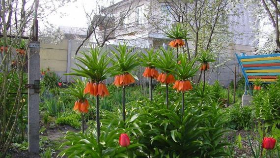 Польза рябчиков для садового участка