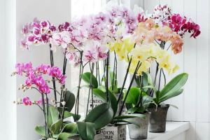 Купила орхидею как за ней ухаживать
