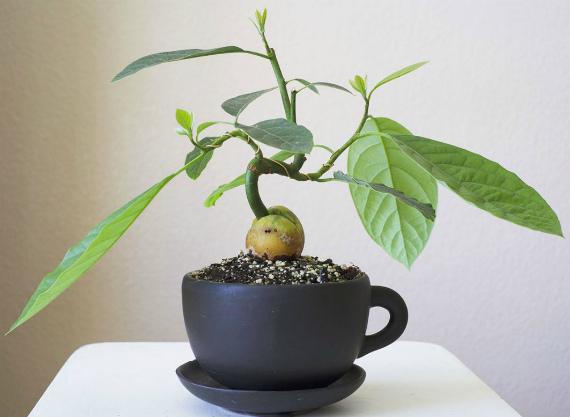 Какие условия нужны для выращивания экзотического дерева