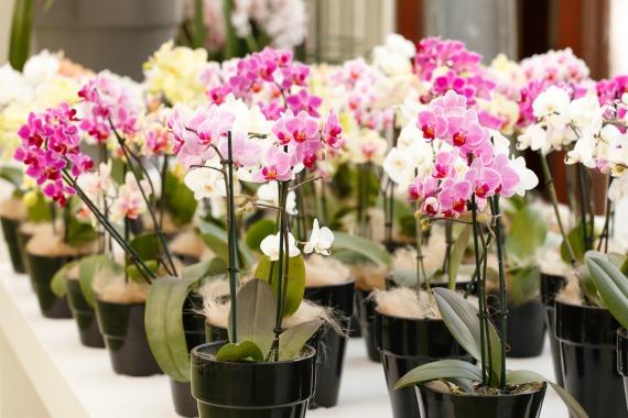 Что нужно делать с орхидеей сразу после покупки