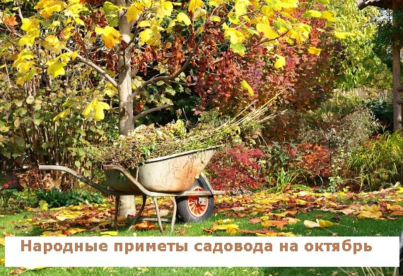 Народные приметы садовода на октябрь