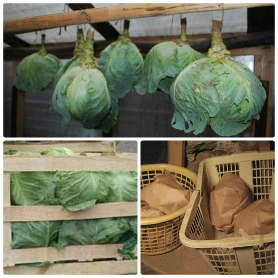 Где и как лучше хранить белокочанную капусту