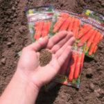 Посадка моркови под зиму в 2019 году