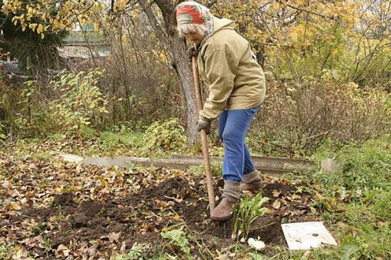 Работы огородников в октябре