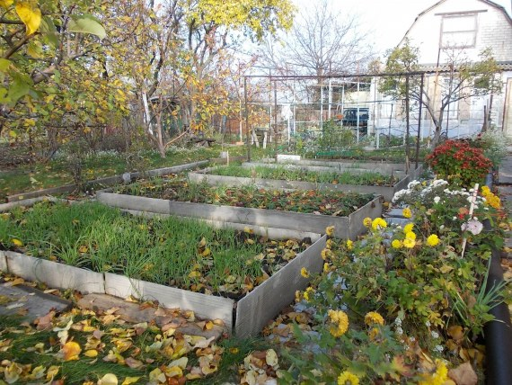 Работы садоводов в октябре