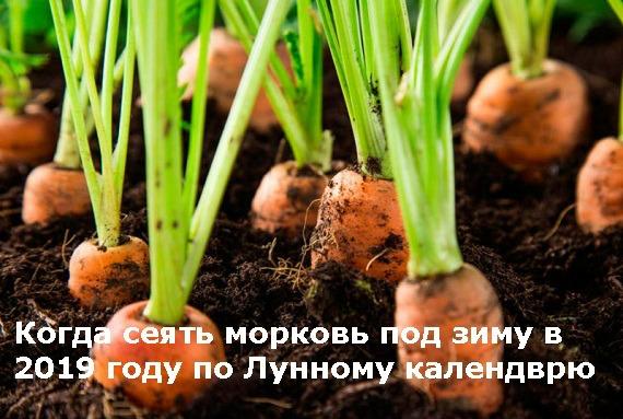 Когда сажать морковь под зиму по Лунному календарю 2019 года