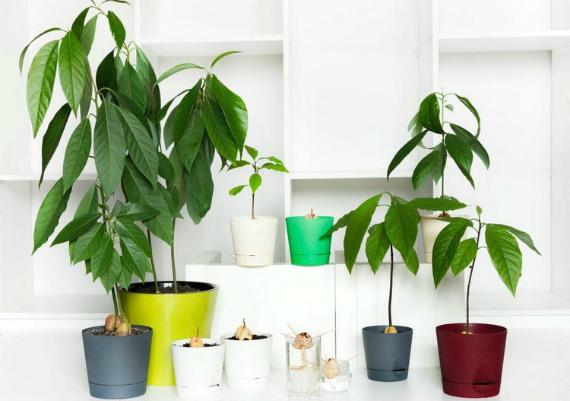 Уход за молодым растением