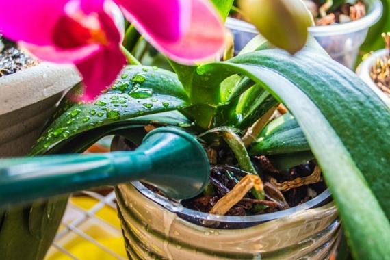 Чем подкормить орхидеи в домашних условиях