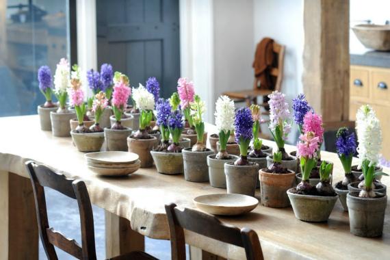 Выбор цветочных горшков и подготовка грунта