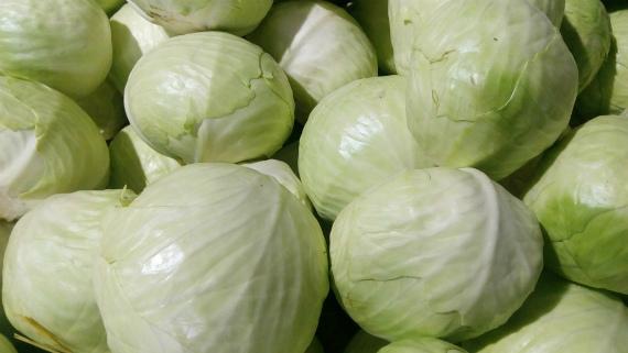 Какие сорта капусты использовать для квашения