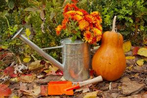 Лунный календарь на октябрь 2019 года садовода и огородника цветовода Таблица Видео