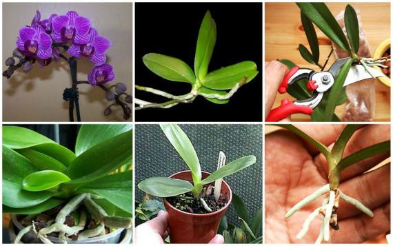 Когда лучше размножать орхидеи