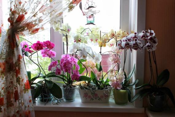 Как определить, что орхидею пора пересаживать
