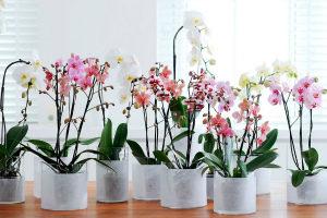 Как пересадить орхидею в домашних условиях в другой горшок Пошаговое фото Видео