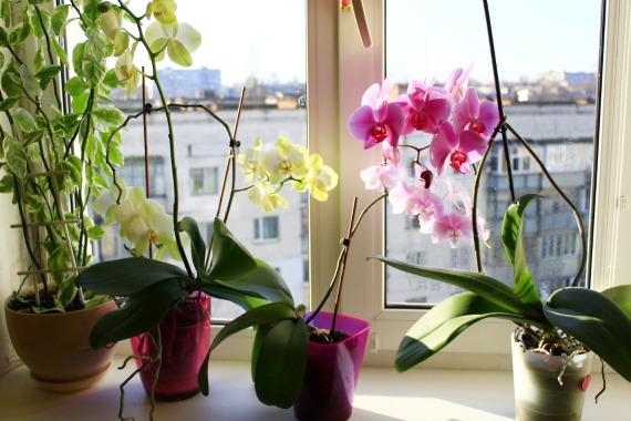 Необходимые условия для размножения растения