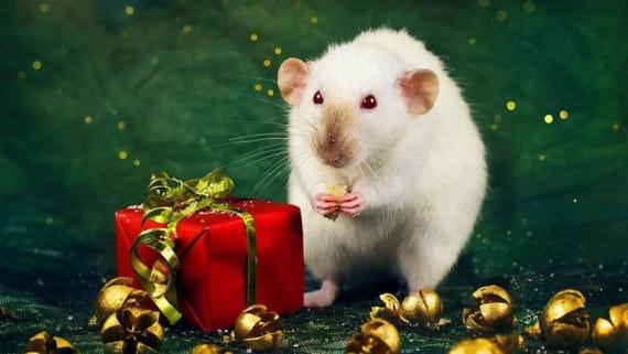 Что дарить не рекомендуется в год Крысы