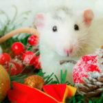 Как встречать новый 2020 год Крысы