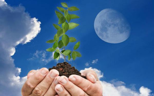 Лунный посевной календарь садовода на январь 2020