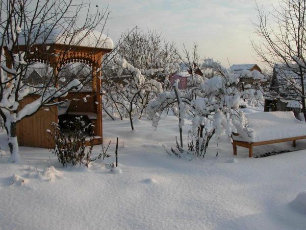Работы огородников и садоводов в январе