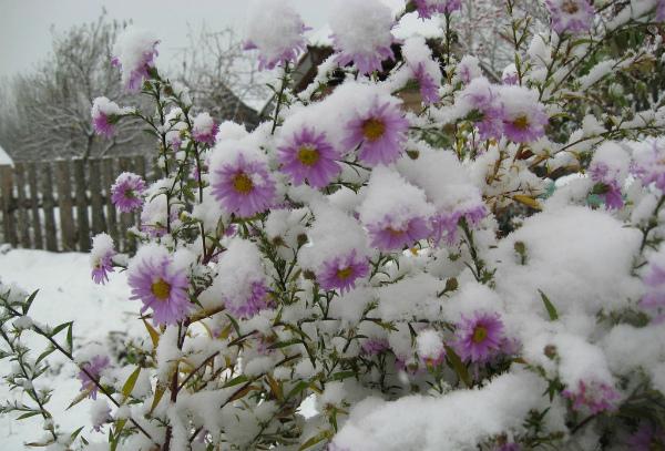 Заботы цветоводов в январе