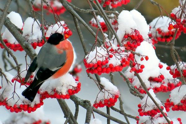 Народные приметы садовода на январь