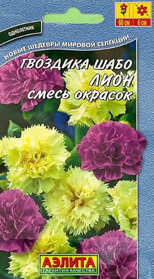 Гвоздика Шабо Лион