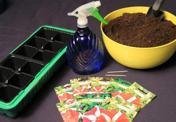 Как посеять петунию на рассаду правильно