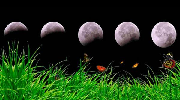 Влияние Лунных фаз на посадку растений
