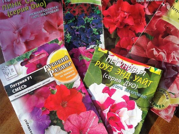 Когда сеять семена петунии на рассаду: оптимальные сроки