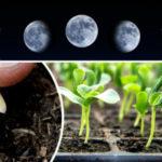 Лунно — посевной календарь на март 2020 года