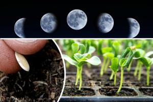Лунный календарь посевных работ