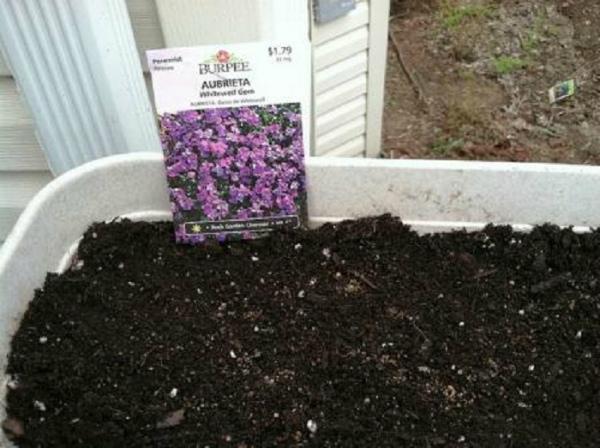 Подготовка семян и посев