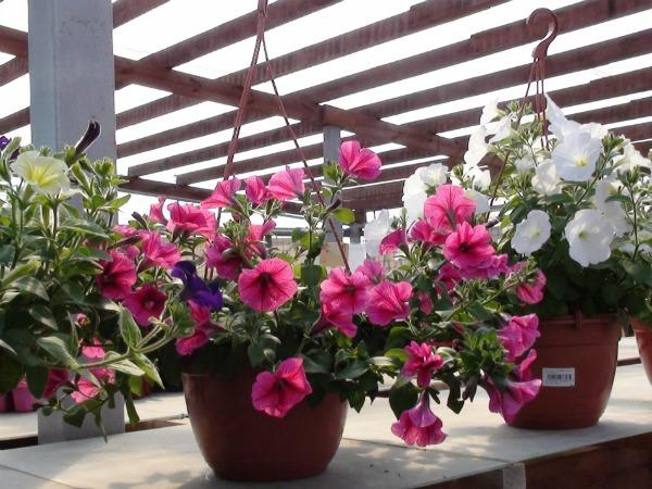 Куда лучше посадить: выбор кашпо и вазонов