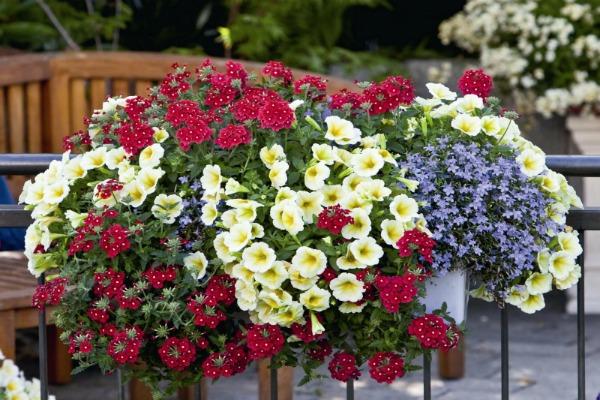 Петуния в кашпо с другими цветами